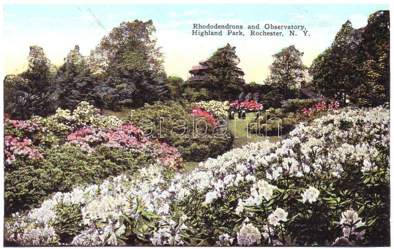 Rochester, Highland park, Rhododendrons and Observatory