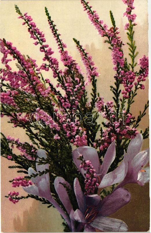 Flower, litho