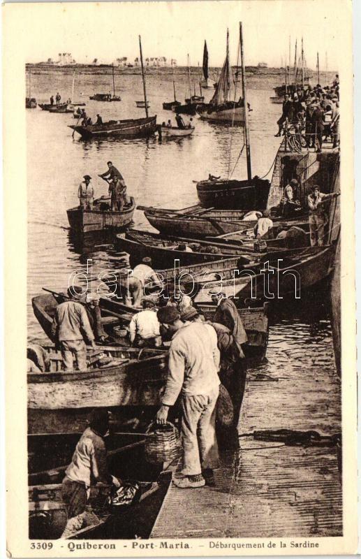 Quiberon, Port-Maria, Derquement de la sardine / fishermen, port