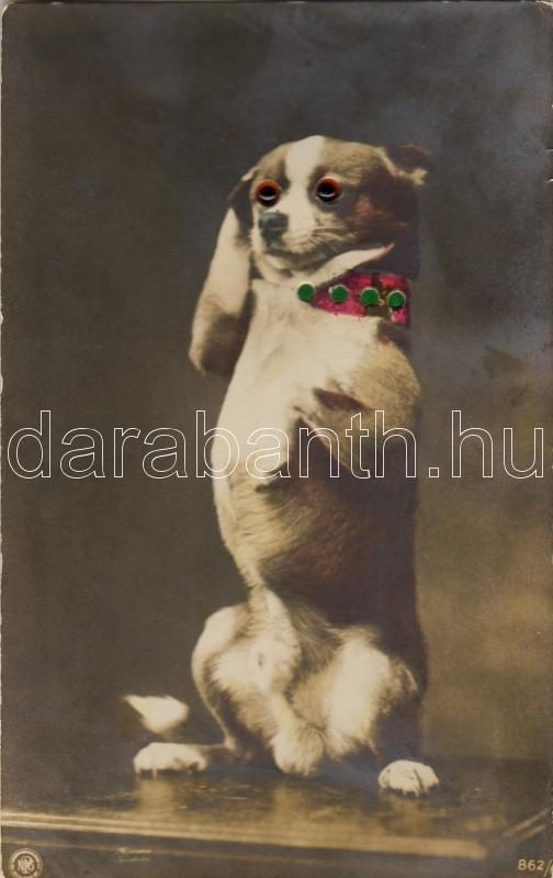 Dog with glass eye, Kutya üvegszemmel
