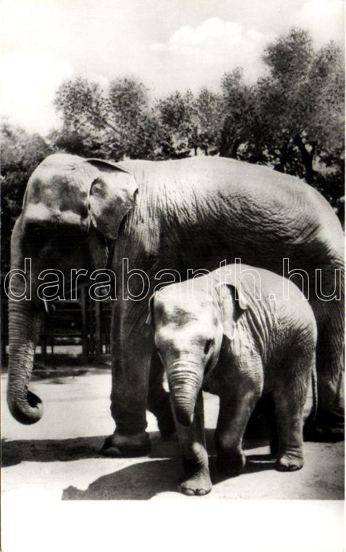 Elephants, Elefánt