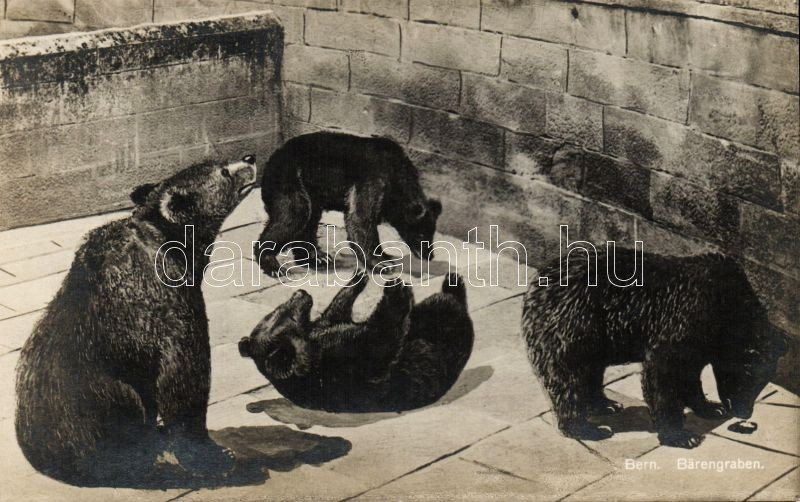 Bern, La Fosse aux Ours / Bärengraben, bears
