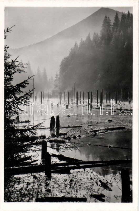 Lacul Rosu, morning mist, Gyilkos-tó, reggeli pára