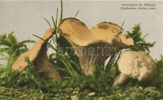Chanterelle / Cantharellus cibarius Sárga rókagomba