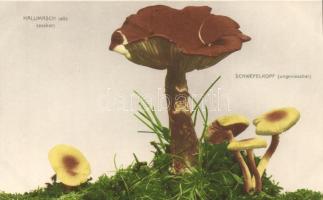 Tölgyfavirág gomba, Sárga kénvirággomba Armillaria mellea, Hypholoma fasciculare