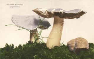 Lila pereszke Tricholoma