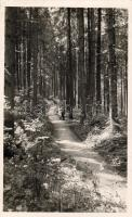 Borsec, Forest promenade, Borszék, Árnyas sétány