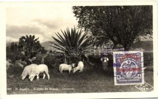 Bogotá, savannah, lamb