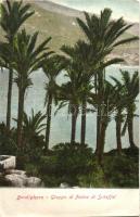 Bordighera, Gruppo di Palme di Scheffel / palm trees
