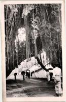 Galle, Óriási banánfa, mint egy diadalkapu az országúton, photo Galle, Banana tree as a gate, photo
