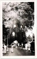 Óriási banánfa, mint egy diadalkapu az országúton, photo Banana tree as a gate, photo