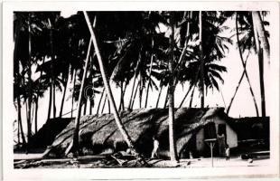 Bennszülött kunyhó a kókuszpálmák alatt Native hut under coconut palm, photo
