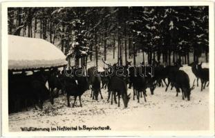 Nesslertal b. Bayrischzell; Wildfütterung / deer feeding