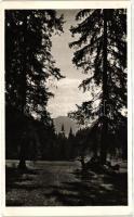 Borsec, forest, Borszék, erdő