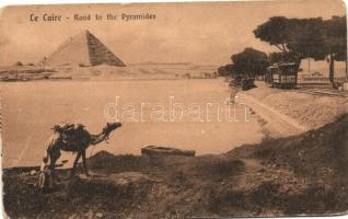Cairo, Le Caire; Road to the Pyramides, camel