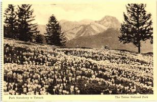 Pastw. Rada Ochrony Przyrody / Tatras National Park, Crocuses in bloom on Toporowa Cyrhla