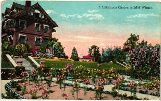 California Garden in Mid-Winter