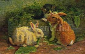 Cat with rabbits, s: M. Stocks, Macska nyulakkal, s: M. Stocks