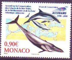 Cetaceans, Cetfélék, Waltiere