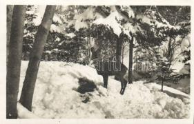 1929 Wildfütterung / winter zoo, deer